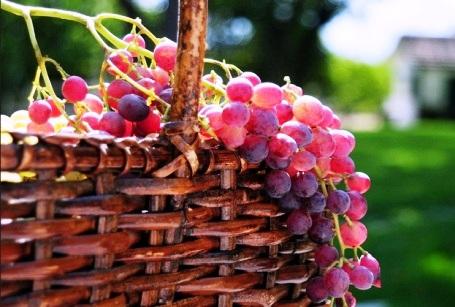 Польза и вред винограда для женщин в период беременности