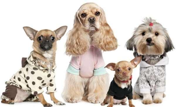 Какая бывает одежда для собак?