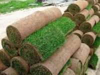 Главные преимущества рулонного газона