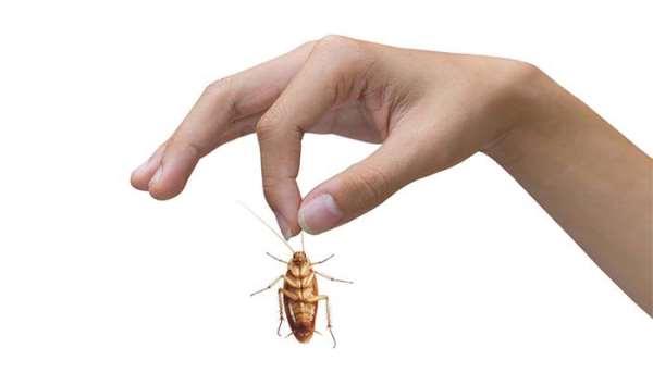 Как бороться с тараканами в квартире, наиболее эффективные методы