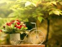 Цветы с доставкой – лучший способ оказать внимание