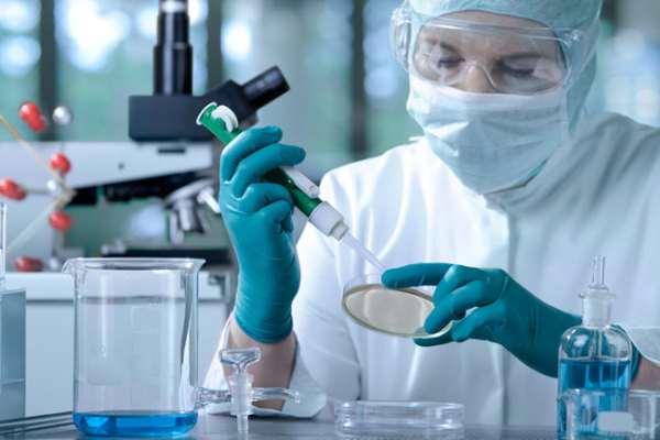 Исследование стволовых клеток   будущее нашей медицины