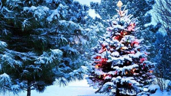 Как создавалась старая советская новогодняя песня «В лесу родилась елочка»: назад в историю