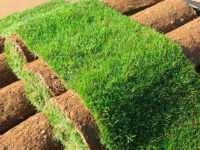 Преимущества и особенности рулонных газонов
