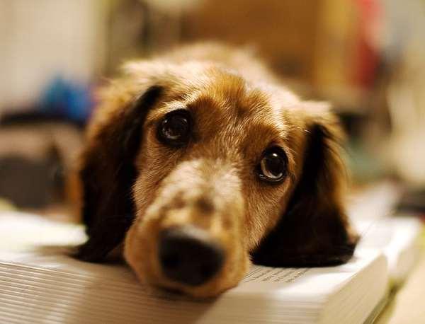 Профилактические мероприятия для поддержания здоровья собаки