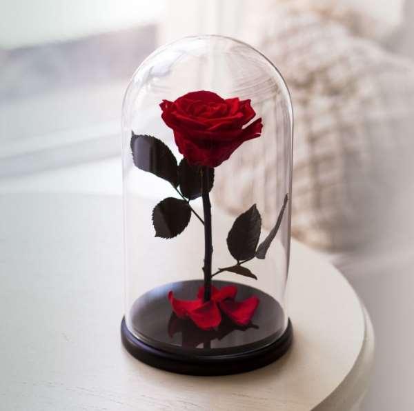 Самый удивительный подарок – долговечная роза