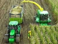 Особенности подготовки кукурузы на силос