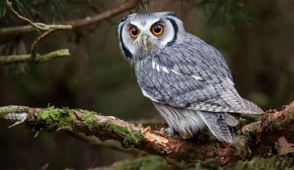 Птица, овеянная тайнами