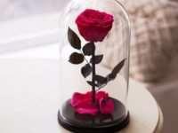 Вечная красота — роза в колбе