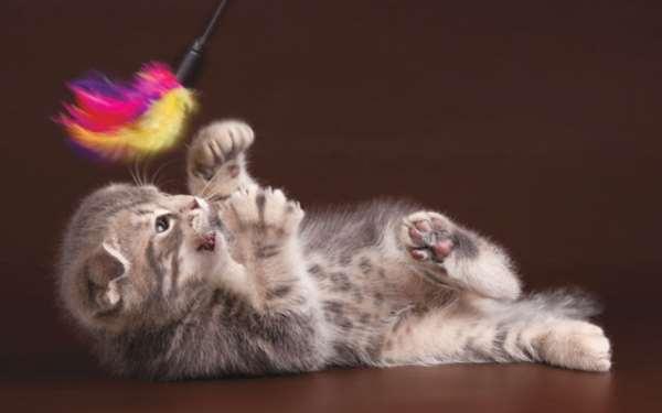 Основополагающие факторы по уходу за кошкой на заметку хозяевам