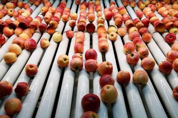 Лесники Звенигородки передали больше тонны яблок черкасским детям
