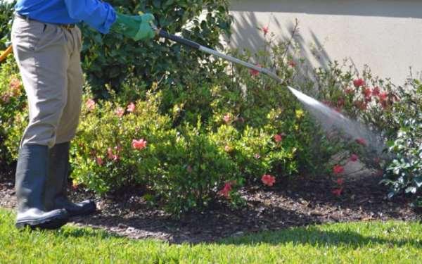 Как не допускать ошибок при уходе за садом и огородом