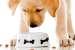 С заботой о питомце: как подобрать собаке сухой корм