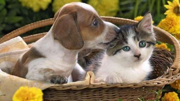 Домашние животные — кошки и собаки как лучшие друзья