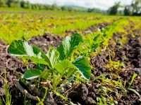 Частное сельское хозяйство: бизнес-идеи