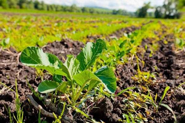 Частное сельское хозяйство: бизнес идеи