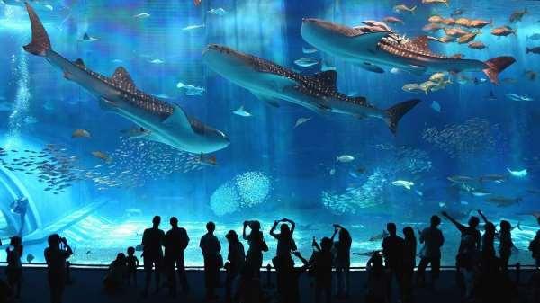 Список лучших аквариумов и океанариумов в Москве