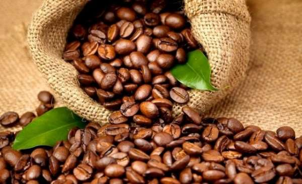 Зерновой кофе — тонизирование и стимуляция организма