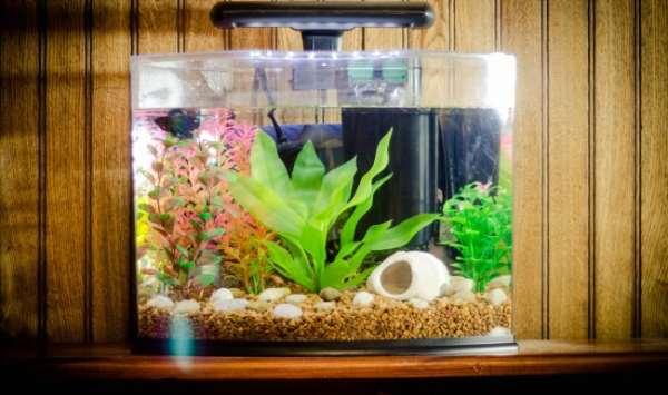 Покупка аквариума – необходимое оборудование