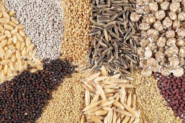 Семена различных посадочных материалов