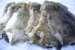 Шкурка кролика — востребованный материал