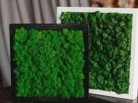Стабилизированный мох: обращаться ли к спецам?