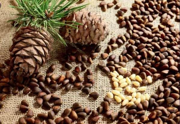 Кедровые орехи и их полезные свойства